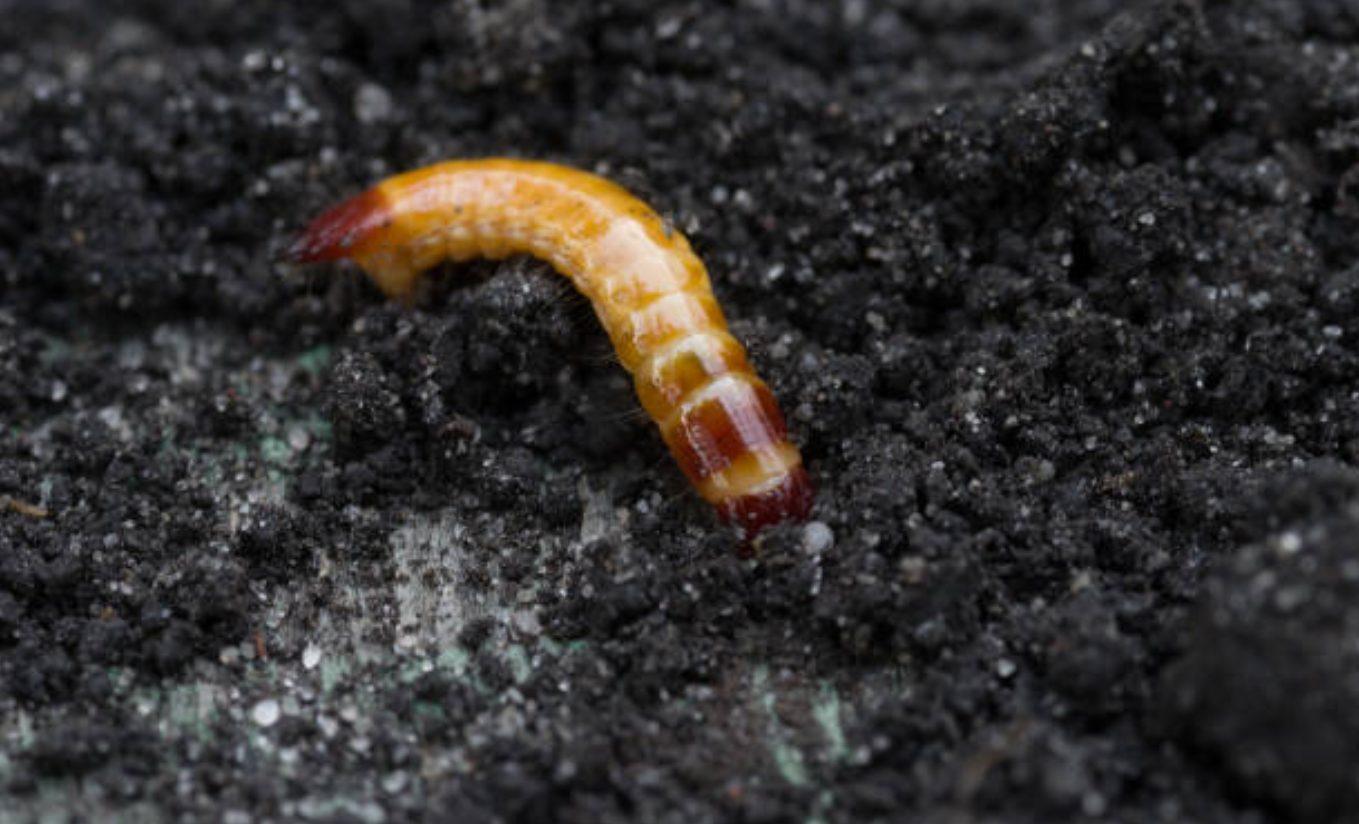 5 raisons d'utiliser le silicium pour améliorer la santé des plantes