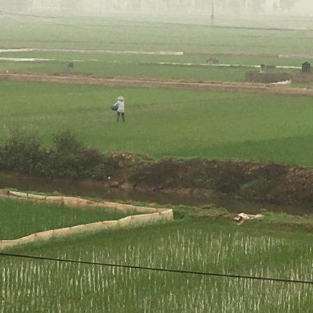 rizière-culture
